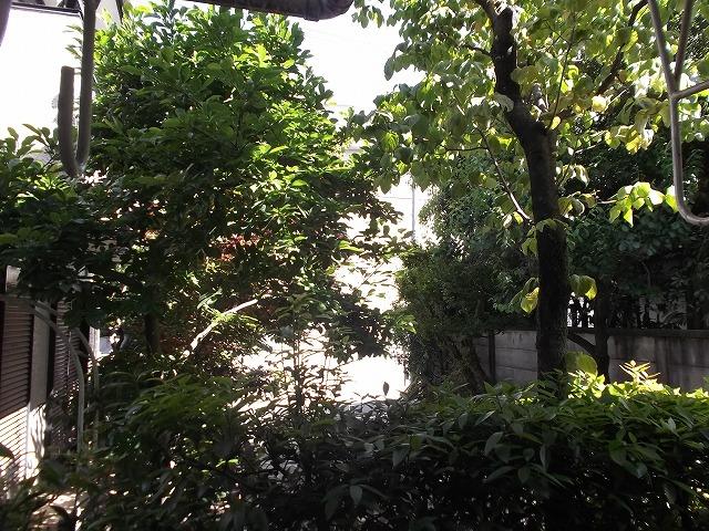 ヴィラテレサ 101号室の景色