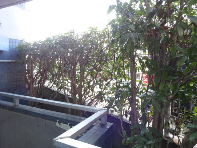 CASSIAたまプラーザ 407号室の景色