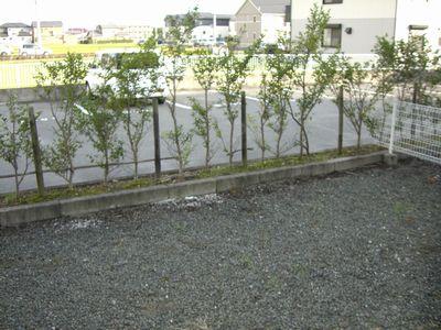 オリオンハイツC 102号室の庭