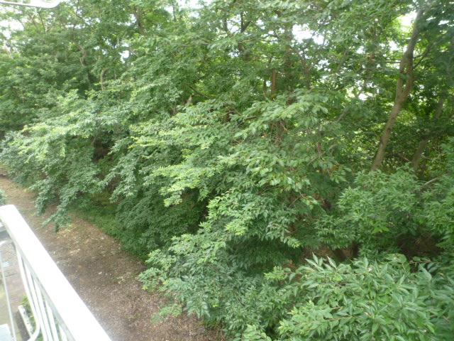 マインツインメル北柏 B-105号室の景色