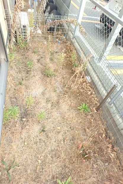センキ2の庭
