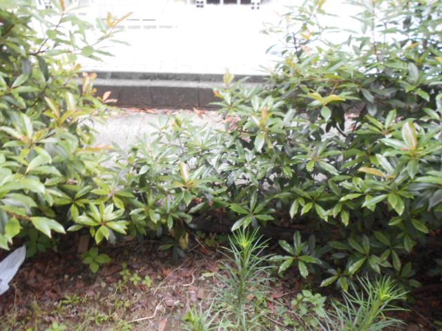 アーバン21 107号室の庭