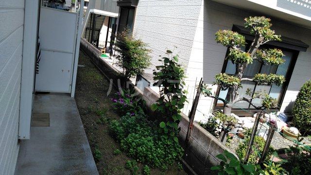 ベイグランド・サワノ B-103号室の庭