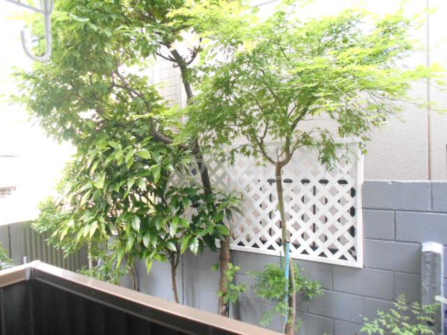 サンブライト福寿 101号室の景色