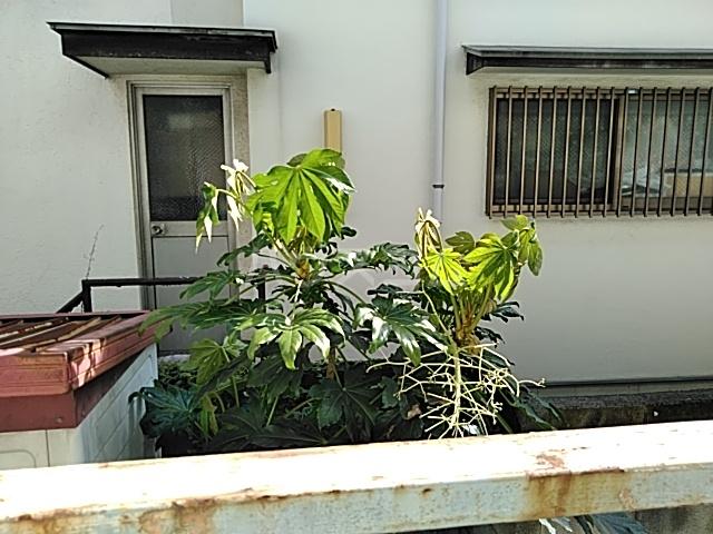 富士見荘 新館 103号室のその他